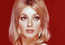 Actress Sharon Tate would have been 76 years old today